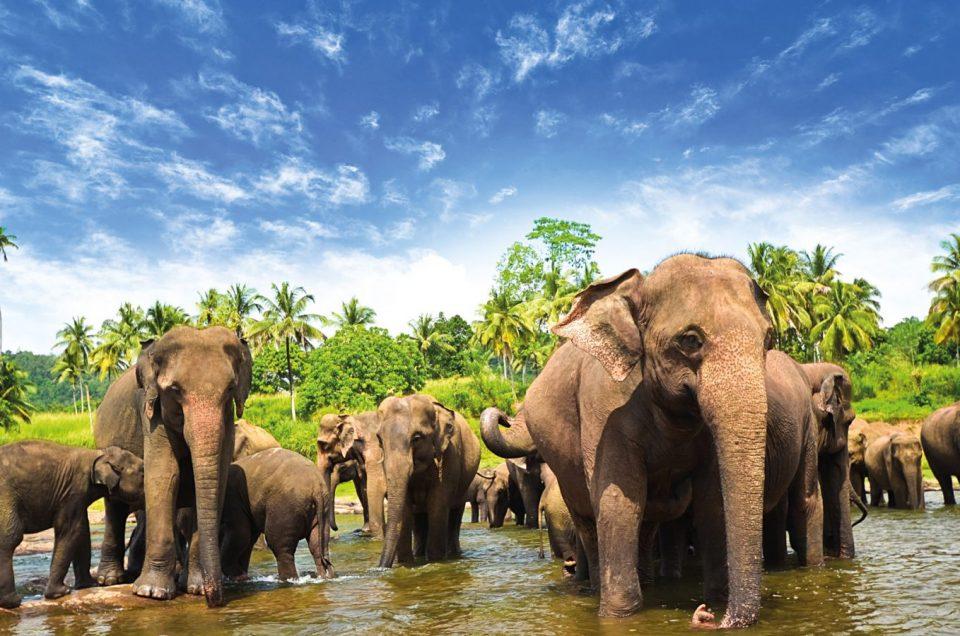10 топ активности в Шри Ланка